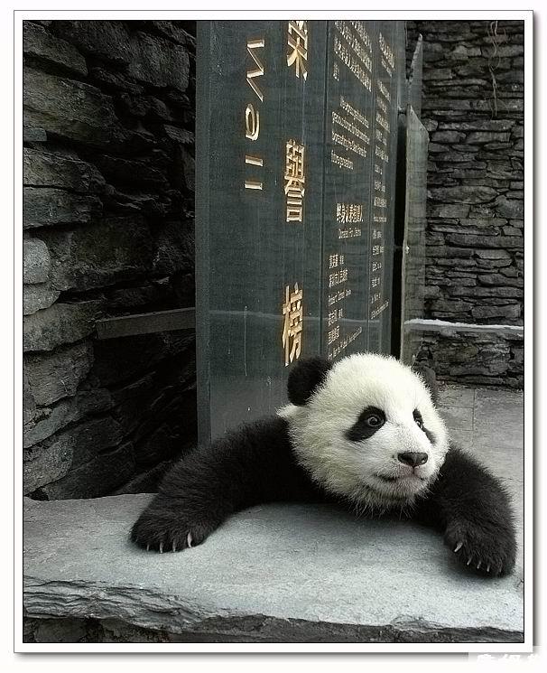 熊猫烧香不是我干的高清图片